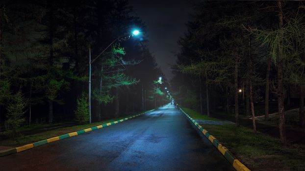 road, night, park, lights, trees, Koptevo, Moscow, Russia