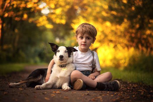 boy, dog, Border-Collie, friends, friendship
