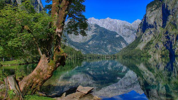 Obersee, Бавария, Германия, Берхтесгаден, озеро Оберзее, Бавария, Германия, Берхтесгаденские Альпы, озеро, горы, дерево, отражение