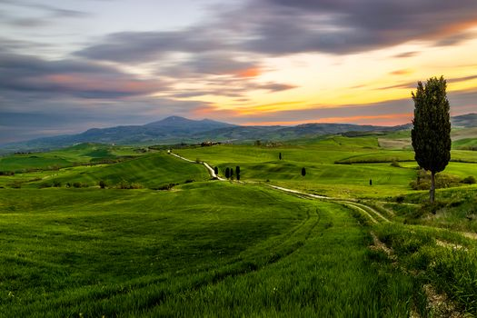 sunset, field, road, hills, trees, landscape, tuscany road