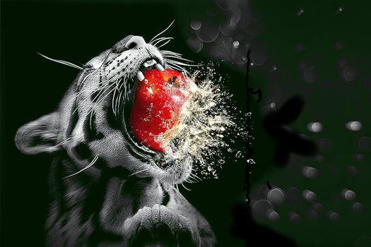 Fakemanipulation, fotomanypulyatsyya, art, photoshop, leopard, An Apple