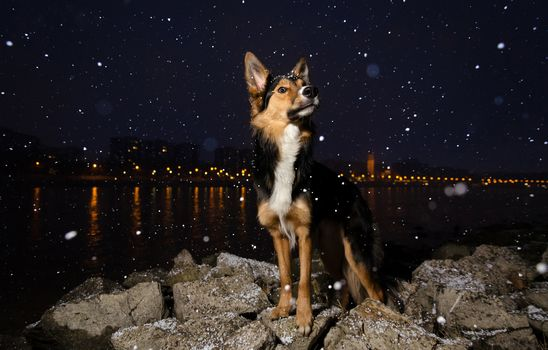 Amazing dog