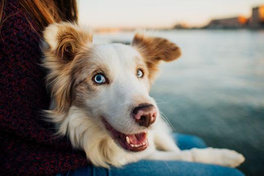 dog, Aussi, muzzle, hozyatska, friendship, ptomec, love, water