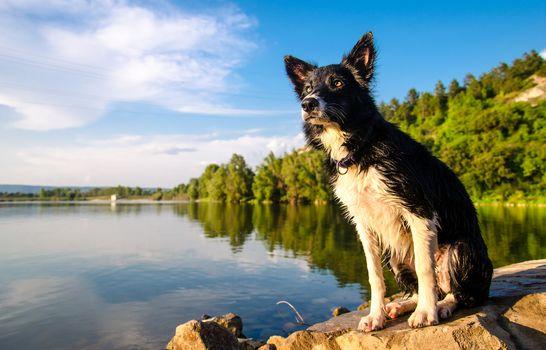 dog, Border-Collie, water, stones, Coast, Hill, sky, summer