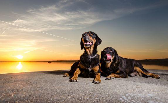 dogs, couple, friends, water, night, sunset, the sun, sky, lie, Concrete, embankment