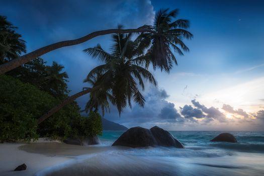 Seychelles, Indian Ocean, Seychelles, Indian Ocean, palm trees, tropics, ocean, stones, coast