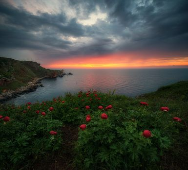 Shabla, Dobrich, Bulgaria, Black Sea, Shabla, Bulgaria, Black Sea, sea, sunset, coast, peonies, flowers
