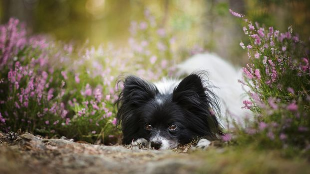 Black and white cute dog