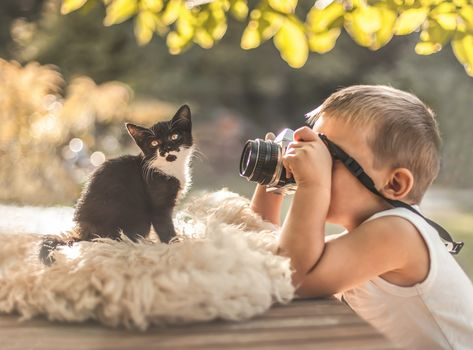 boy, kitten, camera, PHOTOSESSION