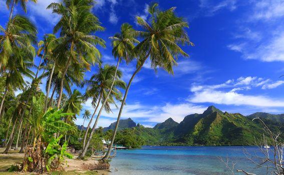 Moorea Island, Ta'ahiamanu Beach, French Polynesia, Pacific Ocean, Moorea island, French polynesia, Pacific Ocean, tropics, ocean, coast, the mountains, palm trees