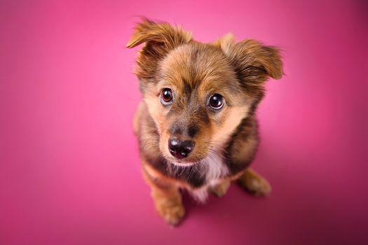 dog, puppy, sight, background