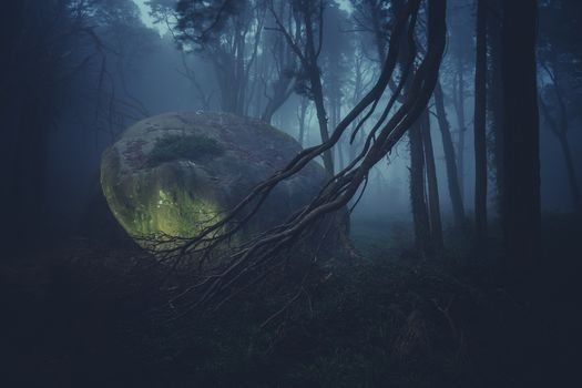 a rock, forest, nature, trees, landscape, stones, moss, branches, fog, grass, trunks