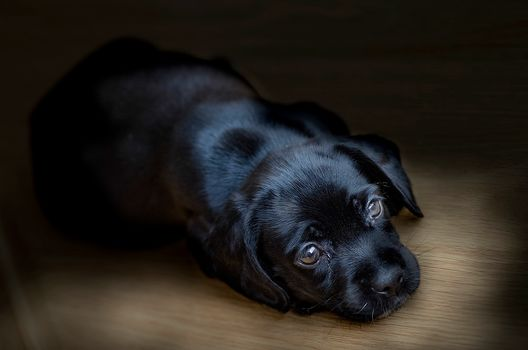 dog, puppy, background, hips