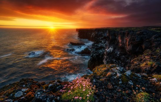 Snaefellsnes Peninsula, Iceland, Atlantic Ocean, Peninsula Snayfedlysnes, Iceland, Atlantic Ocean, ocean, sunset, coast, rock, flowers