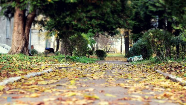 Autumn, Leaf, sheet, background, Nature, Autumn, leaves, Leaf, Background, nature, autumn, leaves, letter, bush, Bush, track, park, Path