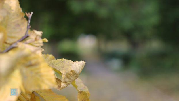 nature, Autumn, macro, Leaf, sheet, hips, background, Nature, Autumn, Macro, leaves, Leaf, bokeh, Background, autumn, leaves, letter