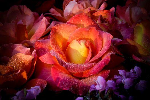 フラワーアレンジメント, バラ, 滴, 花, フローラ