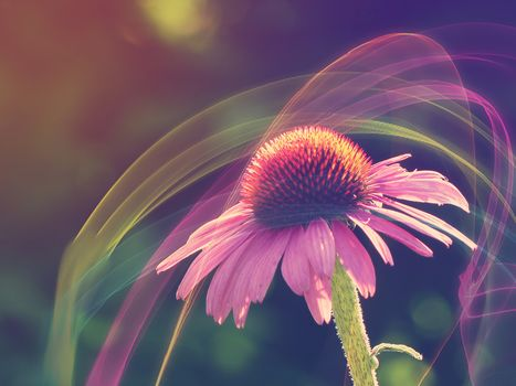 flower composition, flower, flowers, abstraction, flora