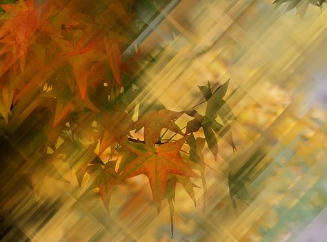 autumn composition, branches, leaves, abstraction
