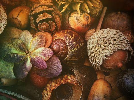 composition, acorns, shell, plant
