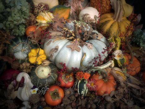 composition, acorns, pumpkin, corn
