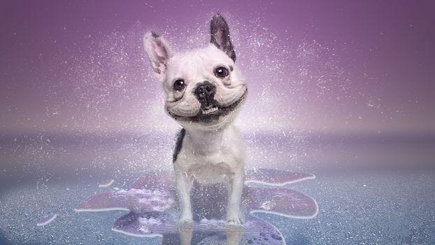 dog, smile, art