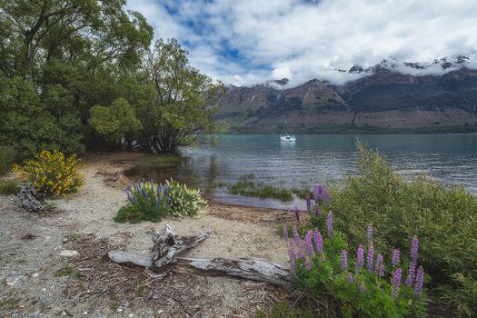 New Zealand, lupine, wildflowers, summer, South island, Snowy Mountains, Ozero Vakatipu, Trailer buses