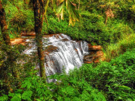 forest, trees, jungle, Sri Lanka, waterfall, landscape