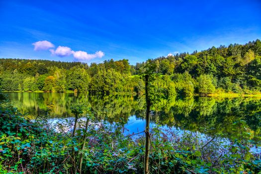 River, forest, trees, landscape