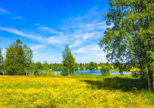 lake, field, flowers, trees, landscape