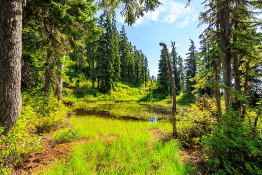 forest, trees, lake, landscape