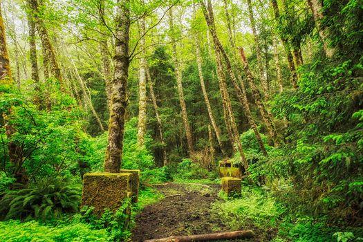 bois, arbres, sentier, nature