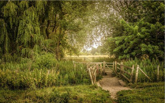 champ, sentier, clôture, arbres, paysage