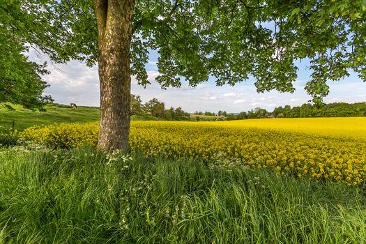 field, grass, hills, flowers, trees, landscape