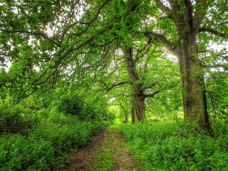 forest, park, trees, road, landscape