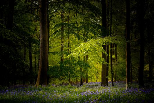 forest, trees, flowers, nature, landscape
