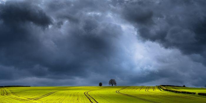 field, clouds, trees, landscape