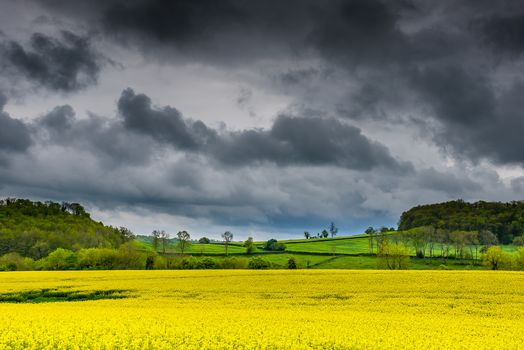 field, clouds, hills, flowers, trees, landscape