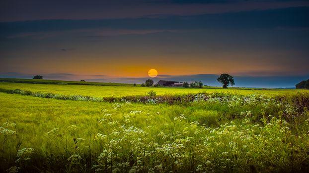 sunset, field, trees, lodge, landscape
