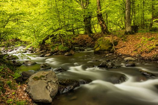 River, forest, trees, stones, nature