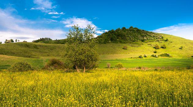 field, hills, flowers, trees, landscape