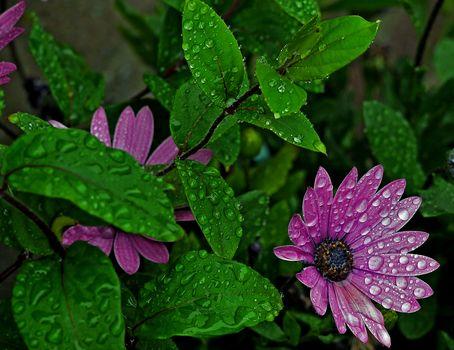 花, 葉, 滴, フローラ