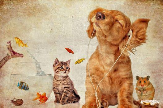dog, kitten, hamster, akkvarium, snake, fish, art