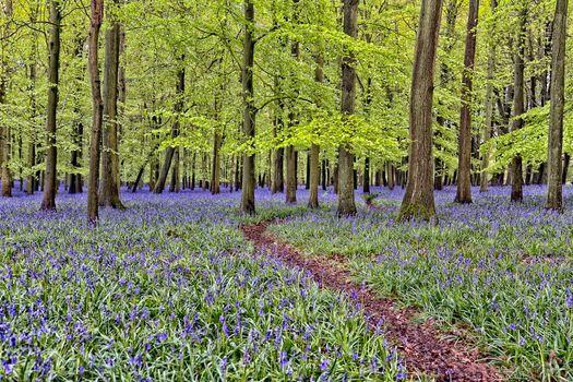 bois, arbres, sentier, fleurs, nature