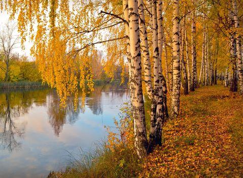 autumn, River, forest, park, trees, landscape