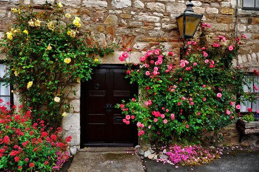 building, house, wall, Door, window, lamp, flowers, roses, interior