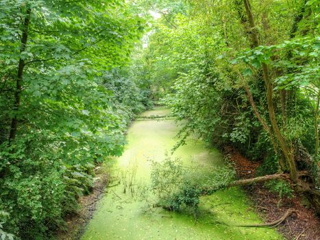 forest, trees, water, pond, nature