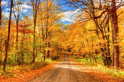 autumn, road, forest, park, trees, landscape
