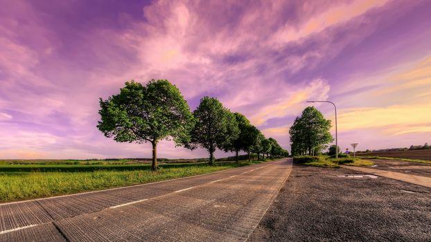 sunset, field, road, trees, landscape