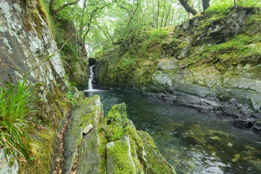 forest, rock, small river, waterfall, trees, nature